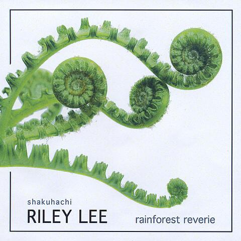 Rainforest Reverie