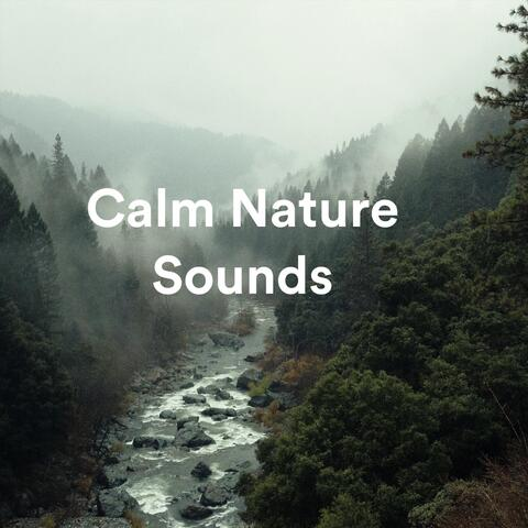 Calm Nature Sounds