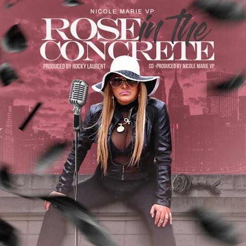 Rose in the Concrete