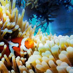 Finbar The Whistling Fish