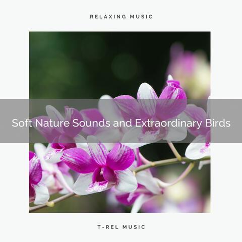 ! ! ! ! ! Soft Nature Sounds and Extraordinary Birds