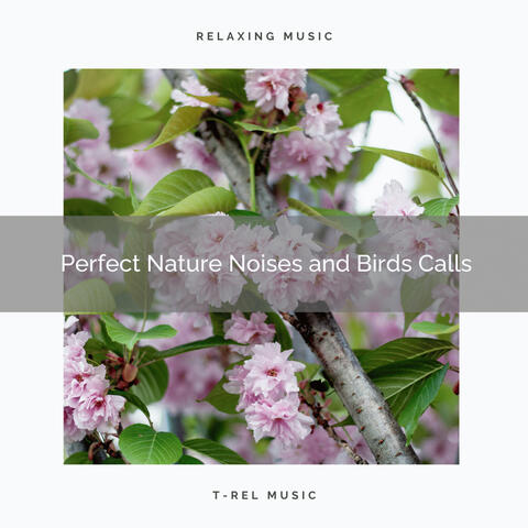 ! ! ! ! ! Perfect Nature Noises and Birds Calls