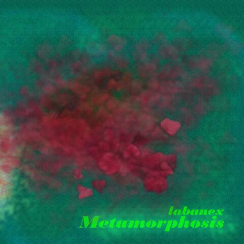 Paradigm Metamorphosis
