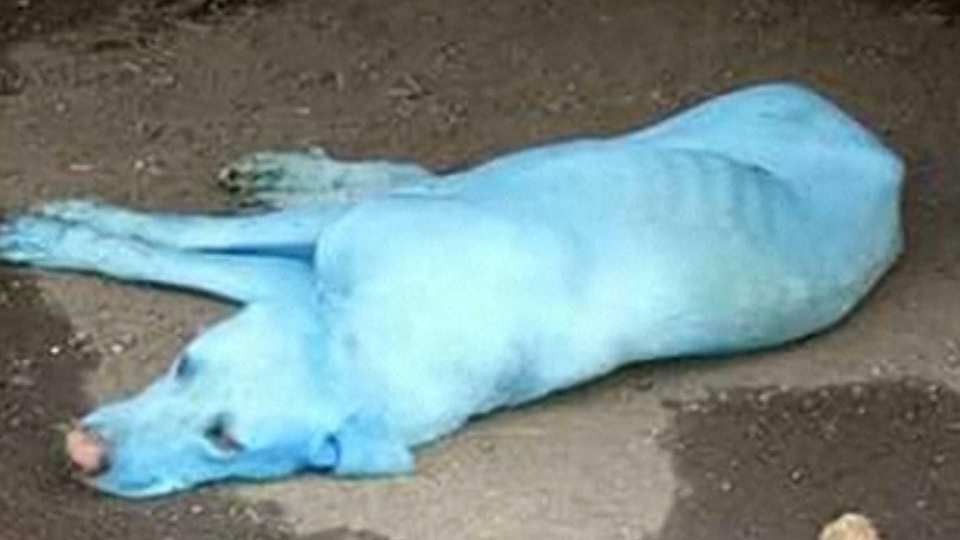 An Industrial Neighborhood's Newest Residents: Blue Dogs