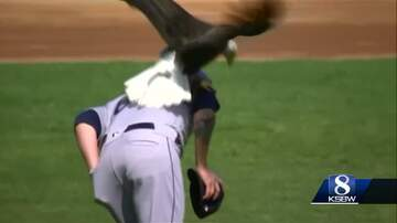 - Bald Eagle Lands On Mariners Pitcher During Pregame Ceremony
