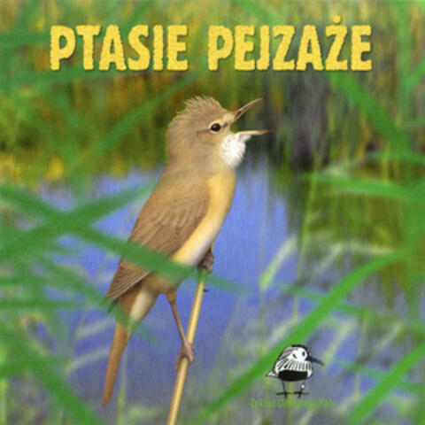 The songs and calls of birds from Poland
