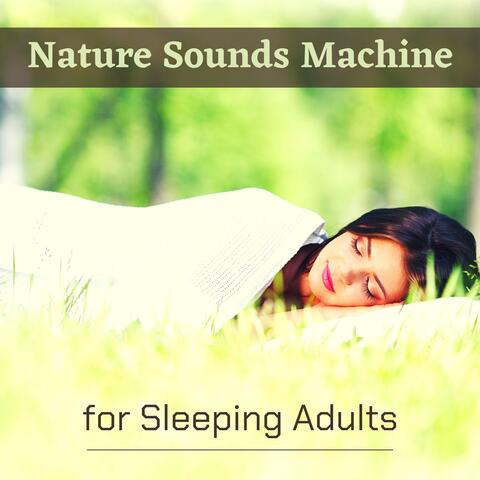 Bird Songs Nature Music Specialists