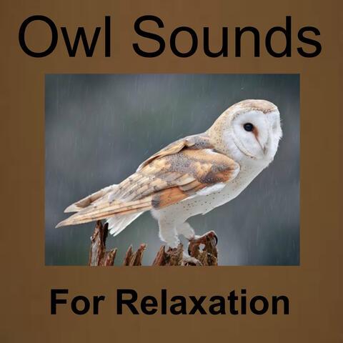 Owl Sounds Recordings
