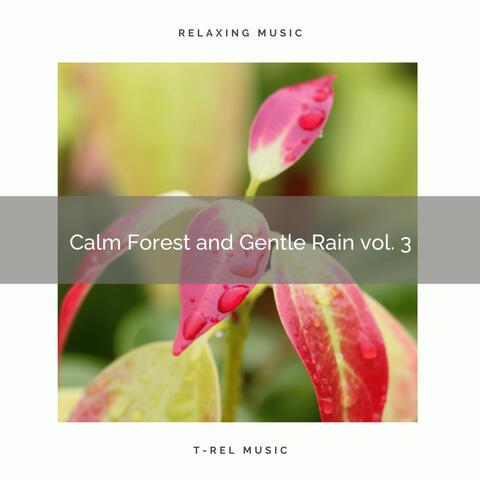 Calming Rainforest Sounds