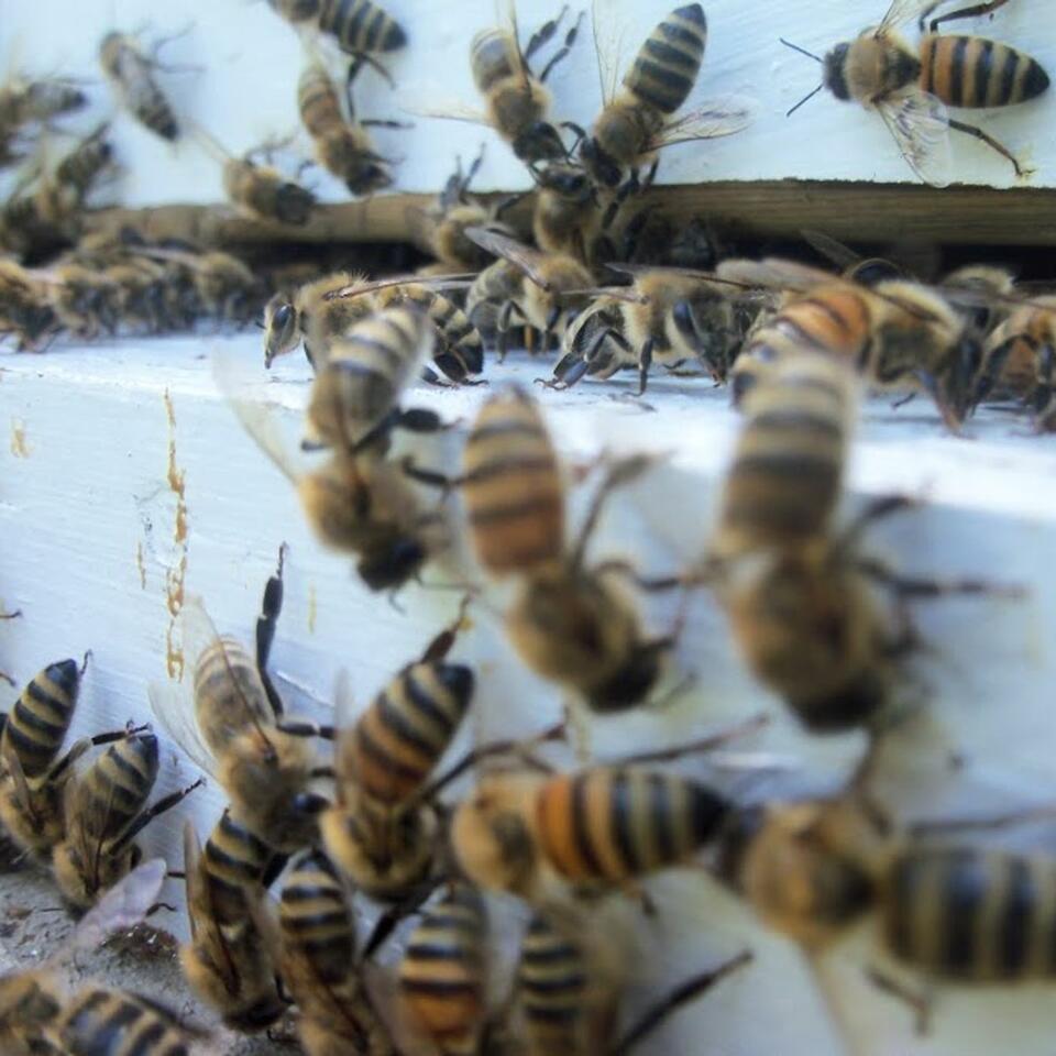 Big Bear's Beehooligans Podcast