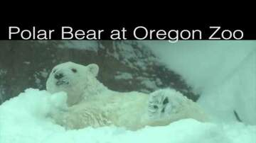 Trending Stories - Polar Bear Experiences First Real Snow Day