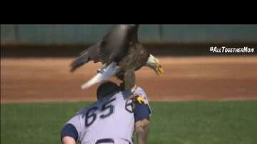 Chad Heritage - Bald eagle lands on pitcher during national anthem