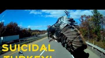 America's Truckin' Network - Free Turkey Dinner!
