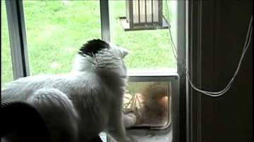 Jami Landis Blog (58594) - Hey Cat, Lemme In