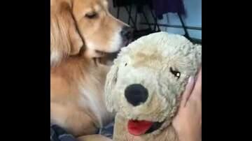 Andie Cooper - One jealous pup