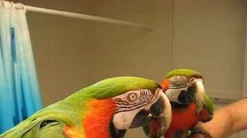 Dave Taft - Even the Bird Has Had Enough Of Your Lip