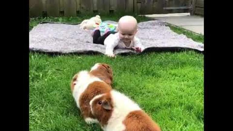 Three Guinea Pigs...One Baby