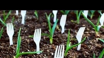 Jami Landis Blog (58594) - Gardening Hacks