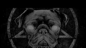 Audrey - Adorable Pug is the face of this Black Metal Band