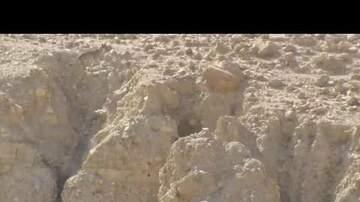 The Bullpen - Wolf Hunts Down Goat In Dramatic Desert Chase