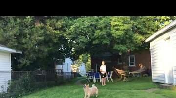 Keith Kennedy - WATCH: Frisbee Dog Fail