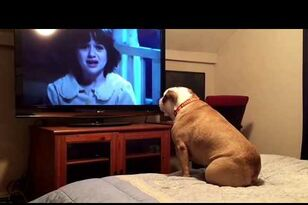 Bulldog Tries to Protect Victims in Horror Movies