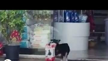Brad Miller - Dog Stops By The Pet Store For His Own Treats