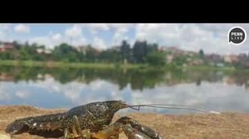 Ryan Gorman - Mutated Crayfish Are Taking Over The World