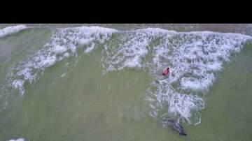 The Proper Gentlemen of Sports - Watch a Dude Catch a Massive Hammerhead Shark on the Beach