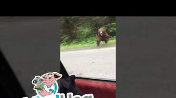 The Proper Gentlemen of Sports - Bear Charges Car in Alaska