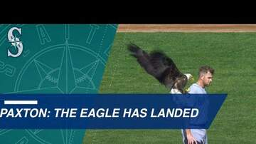 Aimee - Bald Eagle Lands on Ball Player