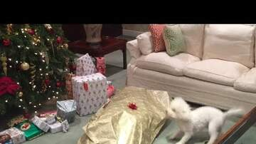 Jeff Olsen - WATCH: Doggone it, this gift is great!