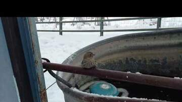 Trending Stories - Man Rescues Sparrow Frozen On Fence