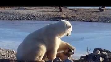 Jim Bodine - Polar Bear Pets Dog