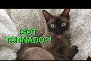 Cat Freaks To Emergency Warning Alert System