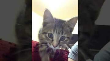 PET CENTRAL -  PET TAILS - WOMAN HEARS MEOWING UNDER SEWER GRATE FOR 6 DAYS