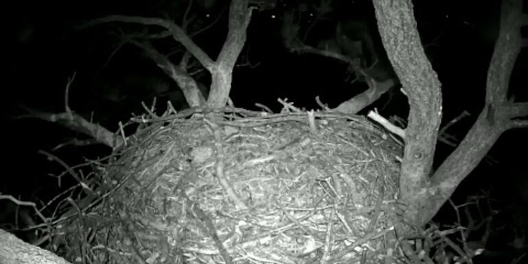 Watch Two Baby Eaglets Grow Up Via Streaming Webcam