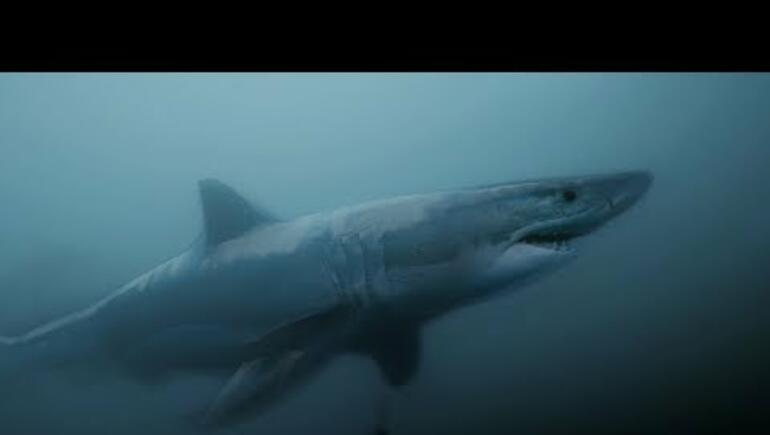 GoPro Awards: Great White Shark Encounter