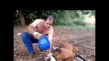Britta - Brazilian Truck Driver rescues a rare Guara Wolf