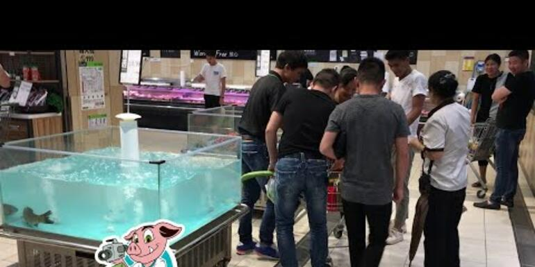 Fish LAUNCHES Itself Right Into A Shopping Cart!