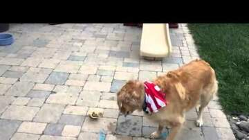 Steve Knoll - Fritz the Retriever Has Trouble Catching Food