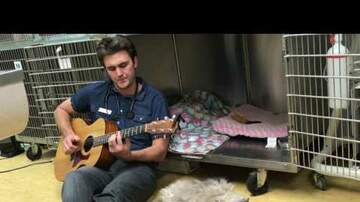 Levi - WATCH: Vet Sings To A Sick Dog