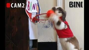 Leah Rizzo - Bini The Bunny has got hops!
