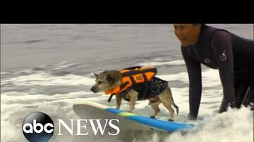 Steve Knoll - Surfing Dogs are a Hit in California