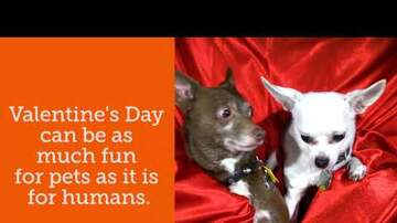 Pet Planet - Keep Your Pets Safe This Valentine's Day!