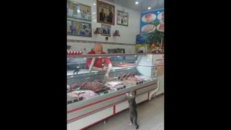 Stray Cat Walks Into Deli, Stands Up At Meat Counter [VIDEO]