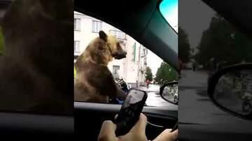 Ballard - Bear In Russian Traffic