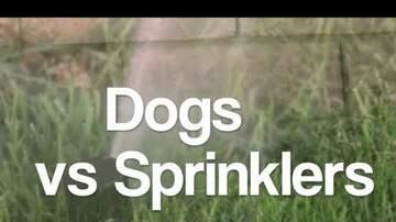 Pet Corner - Dogs vs Sprinklers