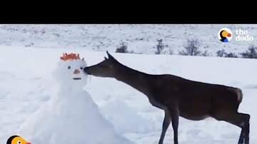 Los Anormales - ¡Muy lindo! Ciervo se encuentra con muñeco de nieve y lo devora