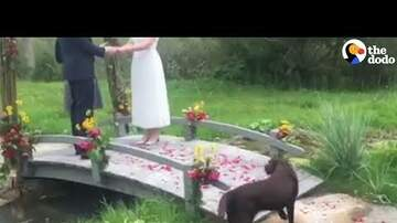 Mat Mitchell - Watch: Dog Crashes Wedding & Decides To Stay
